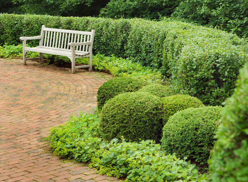 Use Shrubs Instead of Beds